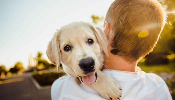 3 cose che puoi imparare da un cane
